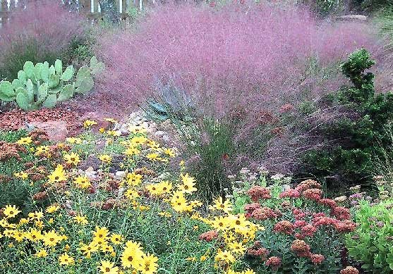 The garden 39 s gift for Xeriscape images